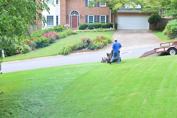 maintaining a healthy lawn